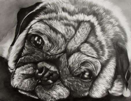 Commission--Pug Mug by TubaQueen