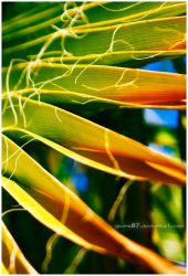 Arecaceae by Givens87