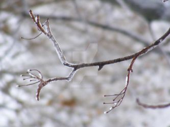 Little icy branch by UrbanekDesign