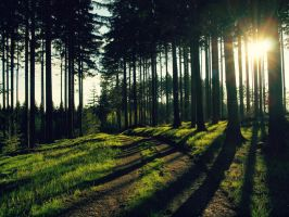 Forest road 4 by FrantisekSpurny