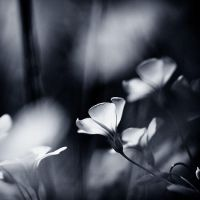 In the middle of flowers ... by julie-rc