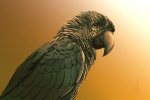 8/365 - parrot by h1fey