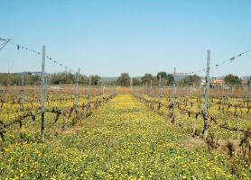 Vineyard View by dracontes