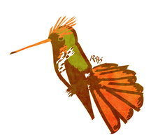 Frilled Coquette by 14Dreamer
