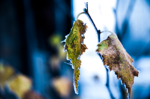 Photography: Winter Is Upon Us 1 by l4gg