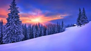 Beautiful Snowy Winter Covered Landscape and Trees by ROGUE-RATTLESNAKE