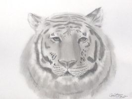Siberian Tiger by Xx-Vintage-Girl-xX