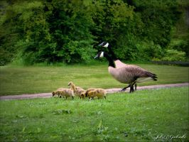 Family walking........ by gintautegitte69