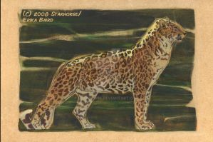 Leopard on Wood by Starhorse