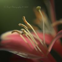 Tantalise by K-Boyd-Photography