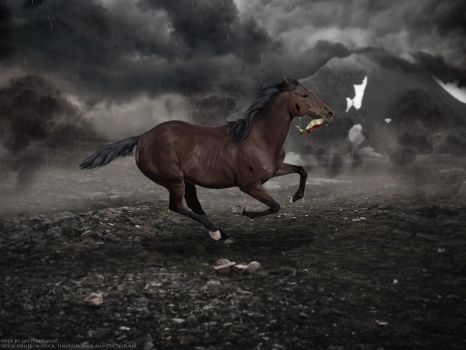 .:WAR HORSE:. by horsecrazycool