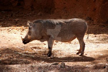 When I was a young warthog! by oddjester