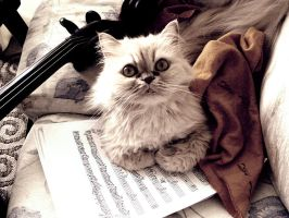 music cat by keeru