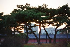 Changdeokgung Palace: In The City by neuroplasticcreative