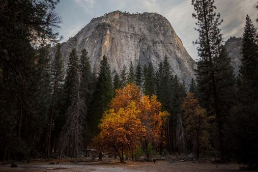 Yosemite by LifeCapturedPhoto