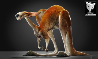 Kangaroo by JBVendamme