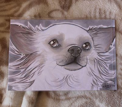 Chihuahua Sketch-dogs by Flfleur
