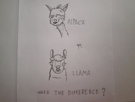 Alpaca Llama Difference by SlugSlimes
