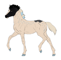 N3214 Padro Foal Design by casinuba