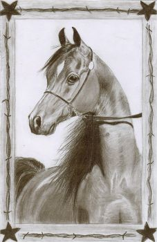 Arabian Horse Pencil Drawing by ChristianCowgirl116