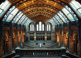 London Natural History Museum by MicroAlex