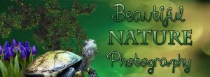 Beautiful Nature Photography Cover by BerlinlavsMarie