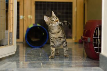 The Pawless Pawrate by hoschie