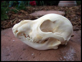 Puppy Skull by Lupen202