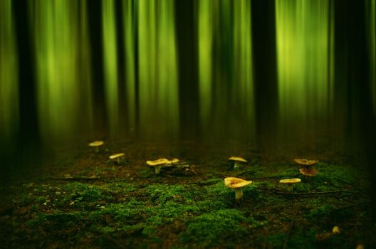 In the forest by HendrikMandla