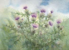 Thistle by louise-art