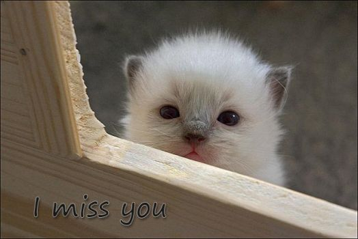 I miss you by delicon