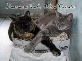 Basement Cat's Weird Cousins by 12monthsOFwinter