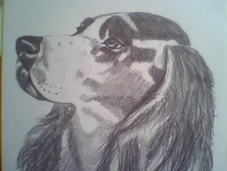 Dibujo 9- cocker spaniel 1 by Taniatv