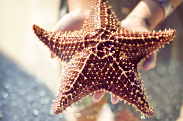 Starfish by Kenrocks