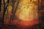 Autumn Walk LXV. by realityDream