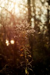 Autumn sun by ladyang