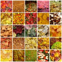 Colours of Autumn by Seraena