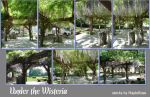 Under the Wisteria photo pack by MapleRose-stock