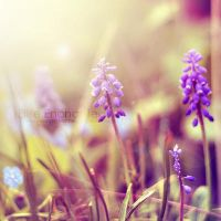 Lavender by EliseEnchanted