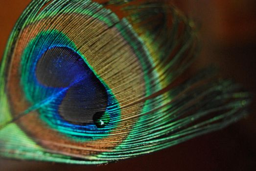 Peacock Eye by AmaureaFirefly