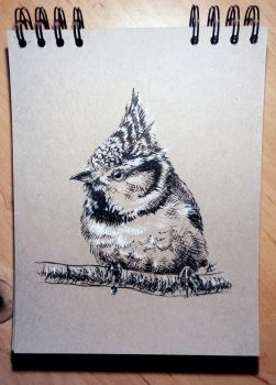 Daily sketch 7 - European Crested Tit by Crateris