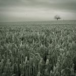 The return to innocence by theflickerees