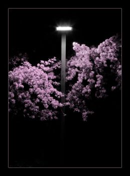 The Lightpost by significantother
