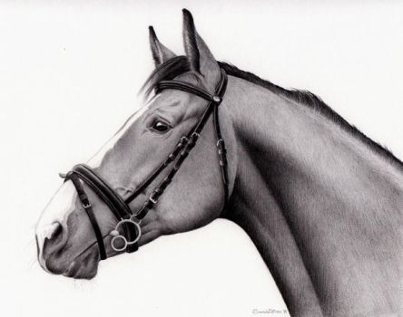 Horse Commission Drawing by SarahEsen