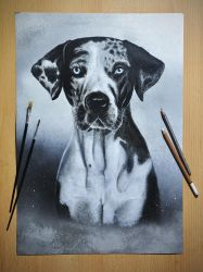 Catahoula dog by kyberdemon