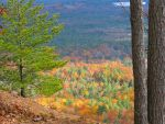 Maine foliage by sataikasia