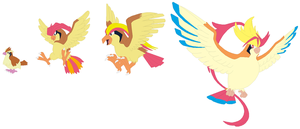 Pidgey, Pidgeotto, Pidgeot and Mega Pidgeot Base