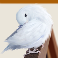 study birb by KrisSsApple