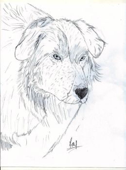 Pyr mix by Canine--Artist