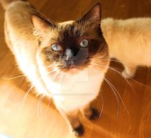 cat with long whiskers in the sun by Carameldreamsx